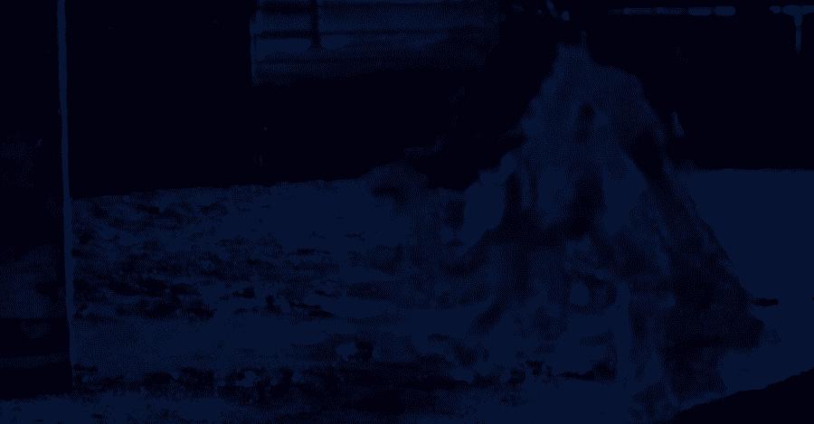 σκυλι της κολασεως hellhound