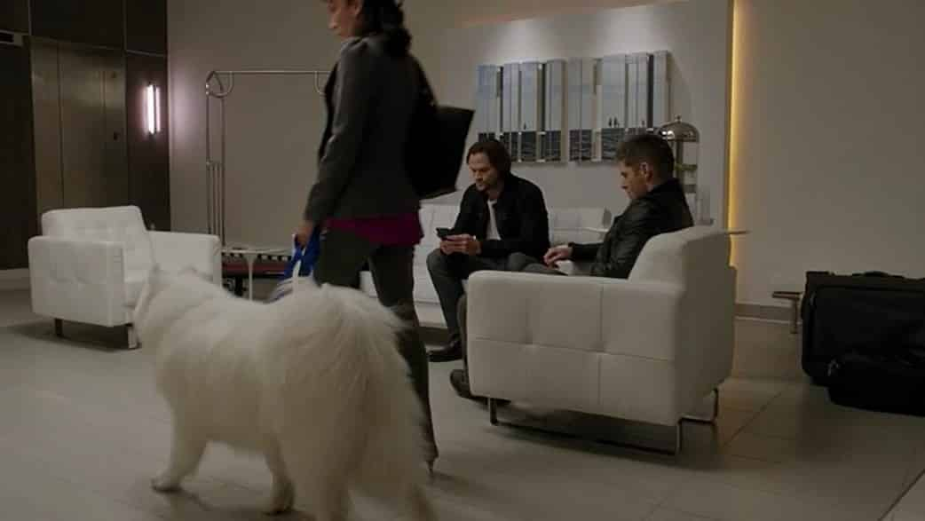 12x07-rock-never-dies-kuma-blu-cameo-dog-sam-dean-background-lounge